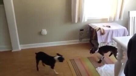 Questo cane odia così tanto le scarpe che fa qualcosa di veramente inaspettato
