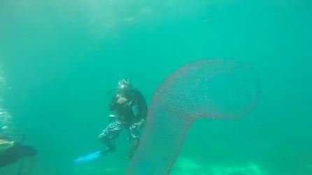 Si immergono nell'oceano e si trovano di fronte alla creatura più strana mai vista prima: cosa sarà?
