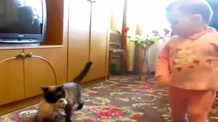Mamma gatto afferra il suo piccolo per la collottola, guardate come reagisce il piccolo