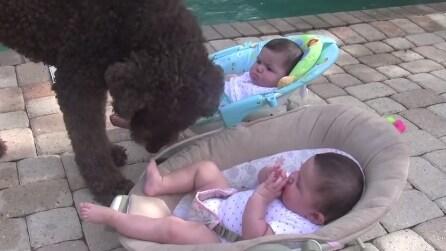 Questo cane si avvicina alle gemelline neonate e la motivazione vi farà sorridere