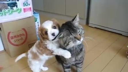 Il cagnolino incontra per la prima volta un gatto: quello che fa è magnifico