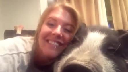 Abbraccia il suo maiale domestico: guardate come reagisce