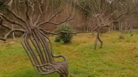 Modella gli alberi con strane forme: lo spettacolo della natura