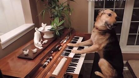"""""""Non hai sbagliato la nota?"""", ecco come rimedia il cane musicista"""