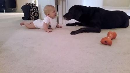 """Bimba gattona verso il cane: guardate il """"peloso amico"""" come reagisce"""