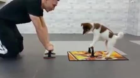 Guardate cosa fa questo cane per imitare il suo padrone. Da morir dal ridere