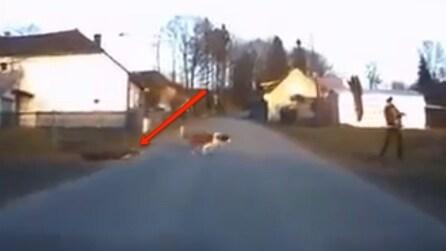 Quando scoprirete cosa trascina questo cane al guinzaglio morirete dal ridere