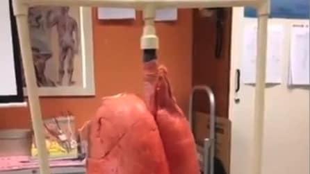 La differenza tra i polmoni di un fumatore e di un non fumatore