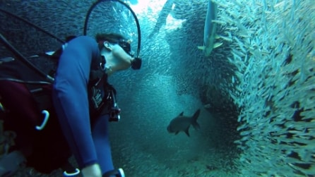 """Un milioni di pesci """"accolgono"""" il sub, l'esperienza stupenda nelle acque delle isole Cayman"""