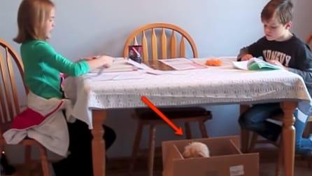 Vedono qualcosa muoversi nella scatola: la sorpesa dei due bimbi
