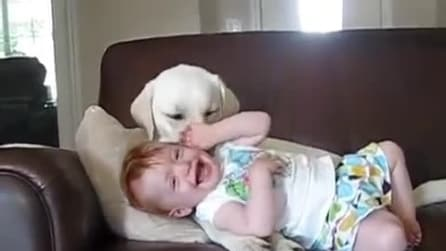 Questa piccolina si accoccola al suo Labrador e guardate cosa fa il cane. Che dolcezza