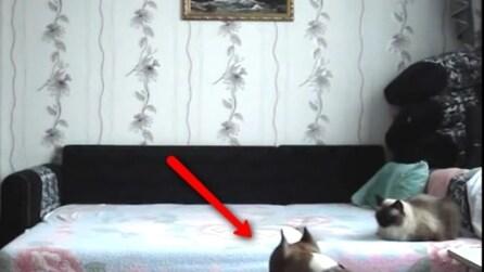 Telecamera nascosta: ecco cosa fa questo cane quando è solo in casa