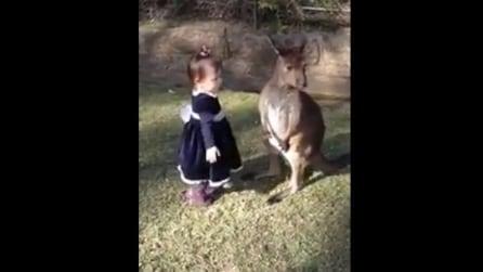 L'incontro tra una bambina e un cucciolo di canguro: la loro reazione è strepitosa