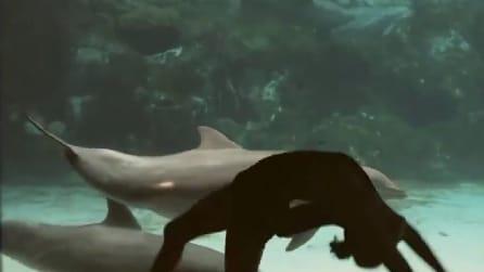 La ragazza fa le capriole davanti la vasca e il delfino reagisce così