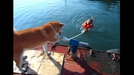Gli chiede aiuto per risalire sul molo: ecco la divertente reazione del cane