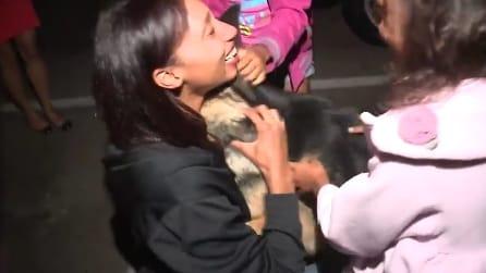 Il cane ritrova la sua famiglia dopo 3 anni. La sua reazione è struggente