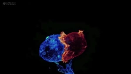 Così vengono uccise le cellule del cancro