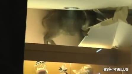 Qualcosa sta entrando dal soffitto e non riescono a credere ai loro occhi