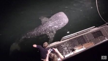 Un enorme squalo si avvicina alla barca: la reazione del pescatore è incredibile