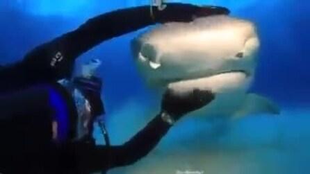 Lo squalo che si fa accarezzare: la reazione da non credere
