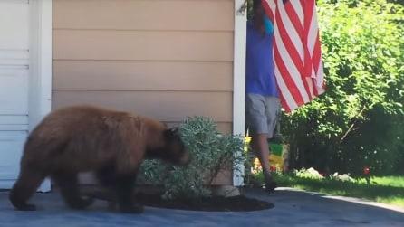 Uomo e orso si incontrano all'angolo, le loro reazioni diventano virali