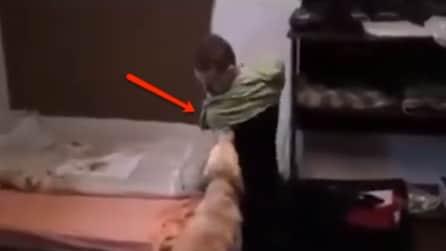Il padrone è senza braccia, il cane prova ad aiutarlo mentre si veste