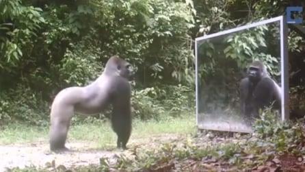 Uno specchio nel bel mezzo della giungla: ecco come reagiscono gli animali