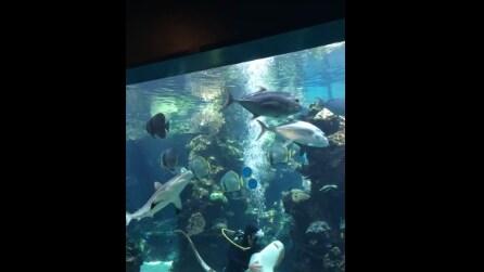 Il sub entra nella vasca, lo squalo si avvicina e guardate la sua incredibile reazione