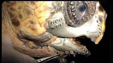 La prima tartaruga al mondo salvata grazie alla protesi 3D