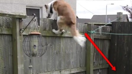 Questo cane ha trovato un modo incredibile per scappare di casa. Il suo padrone non può crederci