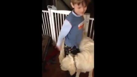 Il cane che si inventa un nuovo modo per abbracciare il suo piccolo padrone
