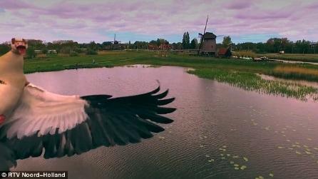 L'oca si avvicina al drone in volo: una reazione che non immaginerete