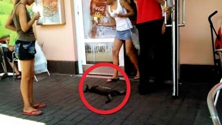 Trovano un gatto immobile davanti la porta di ingresso ed ecco cosa succede