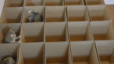 Mettono i gatti nelle scatole e guardate la loro reazione. Divertentissimi!