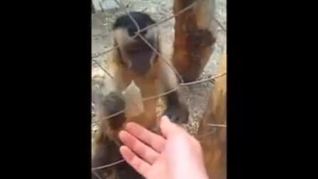"""Si avvicina alla mano dell'uomo e la scimmietta gli insegna qualcosa di """"speciale"""""""
