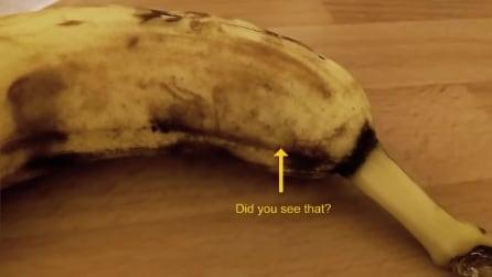 Sta per mangiare una banana quando sotto la buccia qualcosa inizia a muoversi