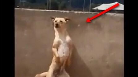 """Il cane """"ballerino"""": quello che fa vi lascerà senza parole"""
