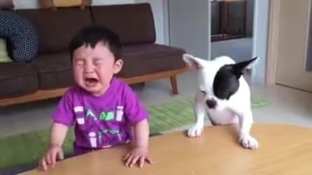 Gli ruba lo spuntino e lo fa piangere, poi il cane si pente ed ecco cosa fa