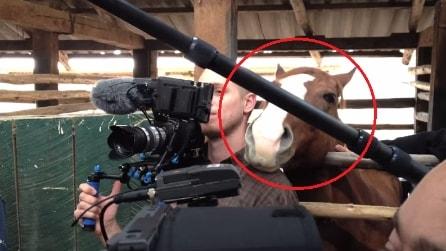 Il cameraman cerca di filmare l'intervista ma fate attenzione al cavallo dietro di lui