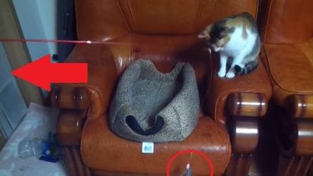 Qualcuno stuzzica il gatto con la canna da pesca. Ecco di chi si tratta