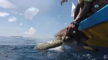 Tirano la tartaruga sulla barca e quello che le faranno le salverà la vita