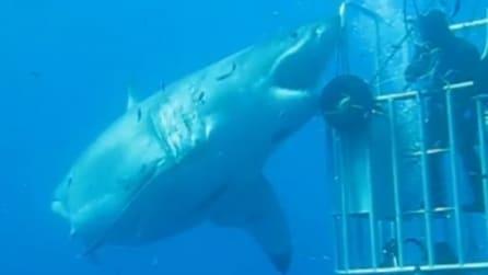 """Coraggioso o incosciente? Il sub esce dalla gabbia e """"affronta"""" il gigantesco squalo bianco"""