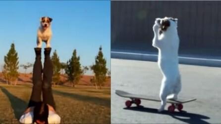 Non riuscirete a credere cosa è in grado di fare questo cane