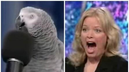 Il pappagallo che imita il verso degli altri animali: da non credere!