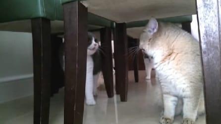 """I gatti che """"parlano"""" tra loro: quello che fanno è troppo divertente"""