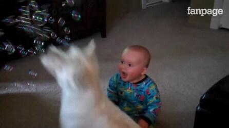 Il cane gioca con le bolle di sapone: la reazione del bimbo è troppo divertente