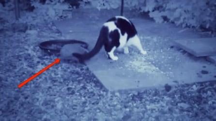 Il gatto sta mangiando beato, ma osservate cosa succede alle sue spalle