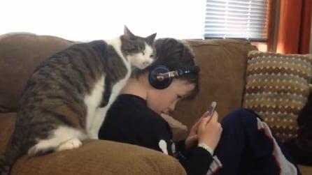 Il bimbo cerca di ascoltare la musica e guardate cosa decide di fare il gatto