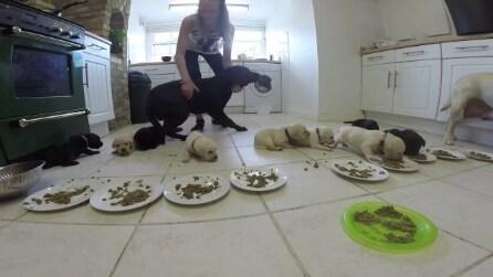 Mettono il cibo nelle ciotole, la reazione dei cuccioli di labrador è tenerissima