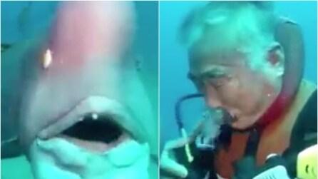 Il grosso pesce gli si avvicina, il sub si toglie il boccaglio e guardate cosa fa